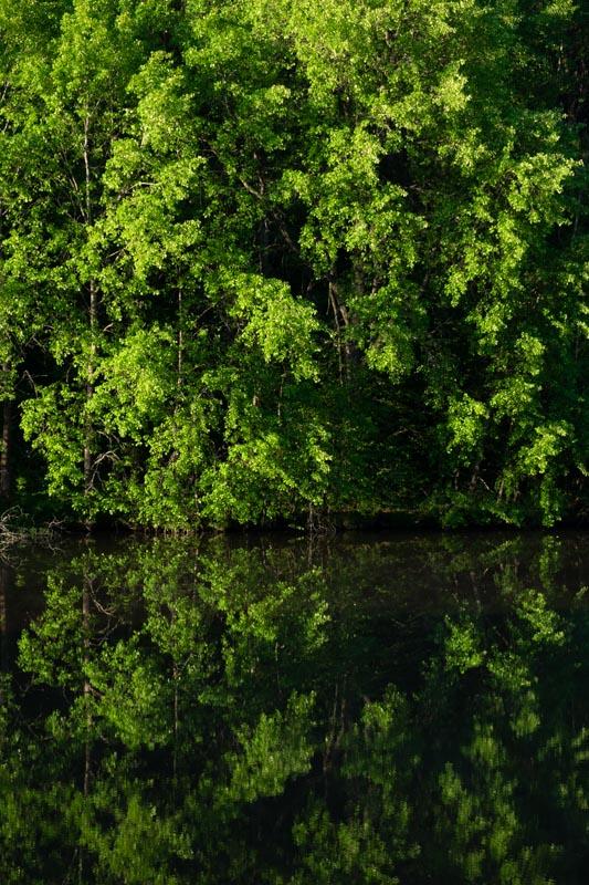 more river foliage
