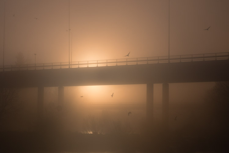 foggy sunrise, bridge, seagulls